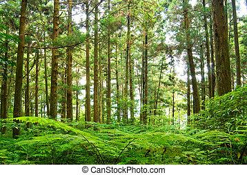 erdő, alatt, hegy, dongyanshan, taiwan, asia.