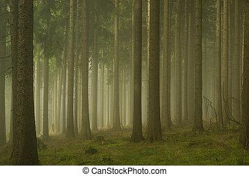 erdő, alatt, köd, 01