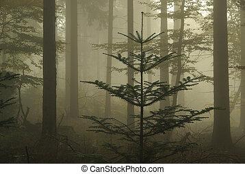 erdő, alatt, köd, 06