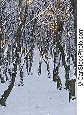 erdő, alatt, tél