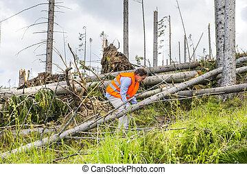 erdő, csapás