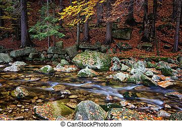 erdő, folyik, alatt, ősz, hegyek