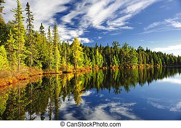 erdő, gondolkodás, alatt, tó