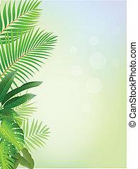 erdő, háttér, tropikus