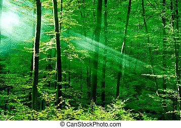 erdő, közül, álmodik