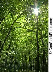 erdő, nap