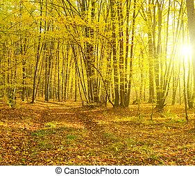 erdő, napsugarak, ősz, önt