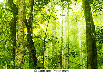 erdő, napvilág