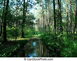erdő, parkosít., floded