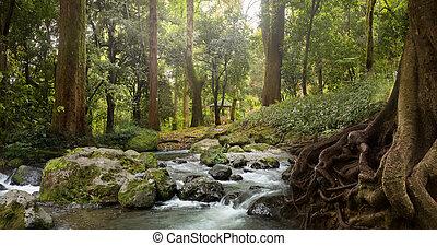 erdő, patak