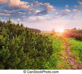 erdő, reggel, nyár, gyönyörű