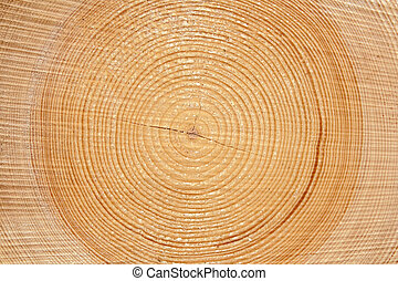 erdő, szelet, faanyag
