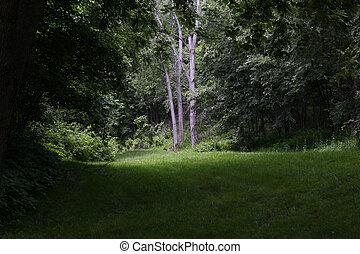 erdő, táj, alatt, nyár