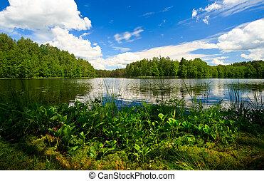 erdő, tó