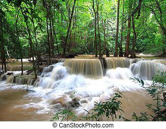 erdő, vízesés
