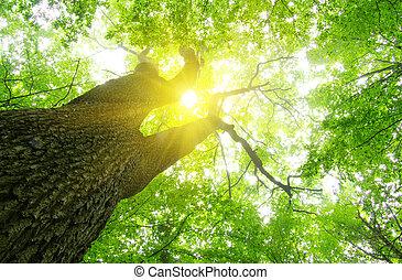 erdő, zöld