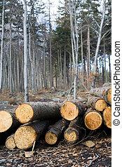 erdőirtás, erdő, terület