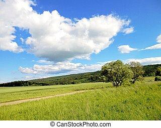 erdők, és, kaszáló, alatt, a, nyár időmérés