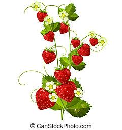 erdbeer, reif, rotes