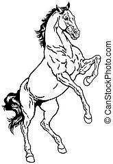 erección, caballo