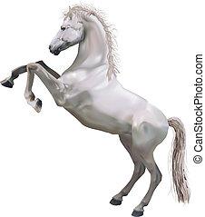 erección, ilustración, caballo