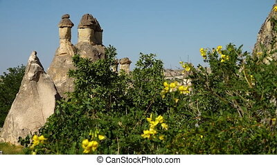 Erect rock formations behind wild scorpion Senna yellow flowers and bushes