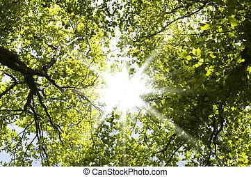 eredet, erdő
