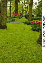 eredet, pázsit fű, kert