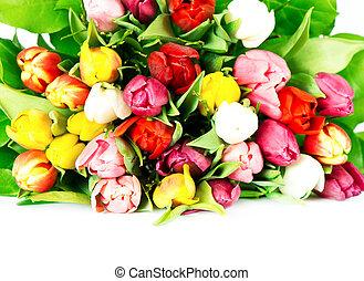 eredet, tulipánok, színes, sok