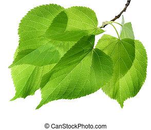 eredet, zöld, felett, zöld white
