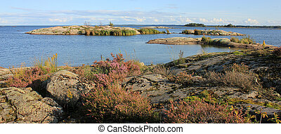 Erica flowers growing on rock formations at the shore of Lake Vanern, Sweden.