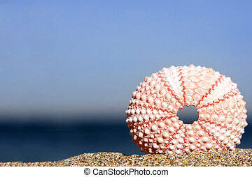 erizo de mar
