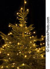 erleuchtet, weihnachtsbaum, draußen, kugel