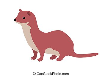 Ermine or Weasel Vector Flat Design Illustration - Ermine...