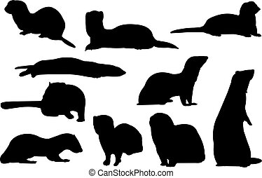 Ermine Silhouette vector illustration