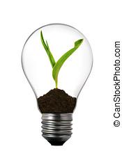 erneuerbar, energy:, glühlampe, mit, grünpflanze, innenseite