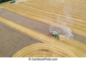 erntearbeiter, feld, korn, während, mows, ernte