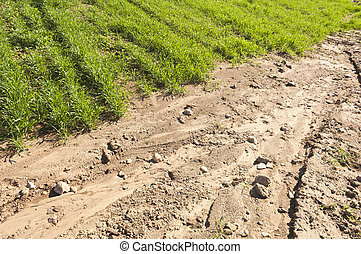 Detail of erosion in a crops field