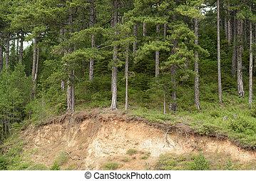 erosión, bosque