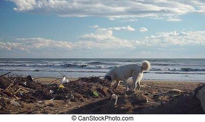 errant, mer, déchets, chien, par, tas, plage, rummaging