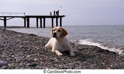 errant, sea., mensonges, sauvage, malheureux, sdf, rivage, ...