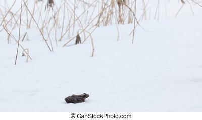 Erroneous premature awakening 4. Frog woke up in early spring, however, snow fell