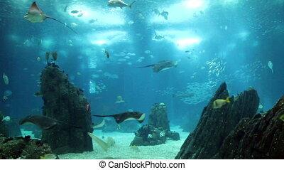 erstaunlich, ansicht, underwater, aquarium, mit, viele,...