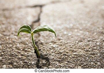 erva daninha, crescendo