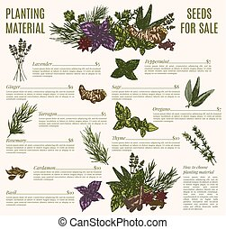 erva, e, tempero, cartaz, modelo, para, orgânica, loja, desenho