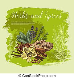 erva, e, tempero, esboço, cartaz, alimento saudável, desenho