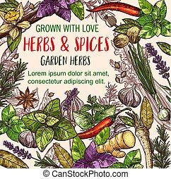 erva, e, tempero, esboço, cartaz, de, herbário, alimento, desenho