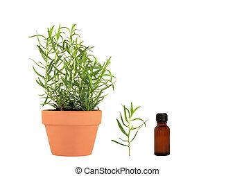 erva, essencial, estragão, óleos