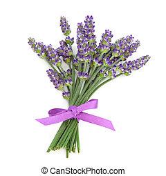 erva, flor, lavanda, posy