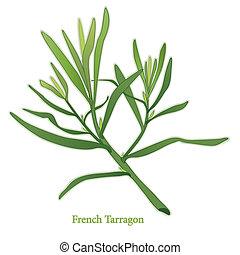 erva, francês, estragão